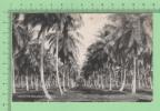 Gibraltar Vintage ( Coconut Proprerty ) Postcard Post Card  Carte Postale - Gibraltar