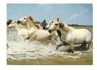 Cp, Chevaux, En Camargue, Manade De Chevaux, Voyagée 1989 - Paarden