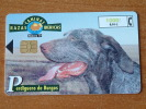 Razaz Caninas Ibericas / Perdiguero De Burgos ( Telefonica Madrid ) ! - Cani