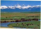Etats Unis  WyomingTeton Range/Teton River  Eastern Idaho Carte Glacée Recto/v  Non Circulé TBE - Etats-Unis