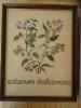 "Merklap Op Kaaslinnen ""Solanum Dulcamara"" - DMC - HANDWERK - Ingekaderd - 25 X 30 Cm - Point De Croix"