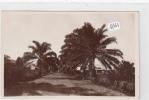 CPA - Congo - Uvira - Une Avenue - Congo Belge - Autres