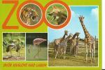 Zoo Dvur Kralove - Tchéquie