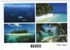 MALDIVES-MALE ATOLL (MICHAEL FRIEDEL No.23/060) / THEMATIC STAMP SHELL - Maldive