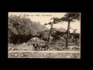 20 - ZONZA - Col De BAVELLA - 3490 - Attelage Ane - France