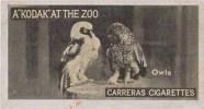 Owl, Hibou, Eule, Uil, Chouette Bird, Cigarette Card - Owls