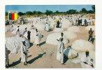 République Fédérale Du Cameroun. La Récolte Du Coton. Photo Hoa-Qui 5682. IRIS - Cameroun
