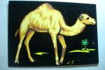 Dromadaire - (carte Velours) - Ohne Zuordnung