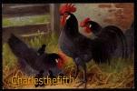 SUPER CP ALLEMAND - SCHEURERER -- COQ - POULE  - MINT !! RASSE NOBLE - T.S.N. Serie 957 - Oiseaux