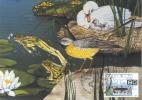 D06775 CARTE MAXIMUM CARD RR TRIPLE 2010 NETHERLANDS - FROG ON STAMP CARD POSTMARK - CP ORIGINAL - Frogs