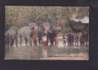 IB059 - CEYLON - Temple Elephants About To Bathe, Kandy - Sri Lanka - Sri Lanka (Ceylon)