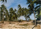 1971 Tanzania Colour Picture Postcard Of The Coconut Trees  ,with Nice Stamps - Tanzania