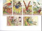 Kolibries (Liebig 1936) - Liebig