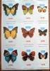 LOT De 9 Autocollants Papillons - Stickers