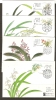 CHINA - 1988 ORCHIDS MAXIMUM CARDS SET OF 4   Ref MC8 - 1949 - ... People's Republic