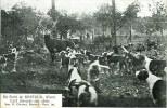 CHASSE à COURRE En Forêt De Breteuil Cerf Dix-cors Aux Abois - Hunting