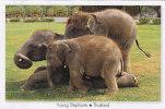 THAILAND - AK 107267 Young Elephants - Elephants