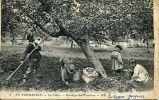 N°18423 -cpa En Normandie -le Cidre- Gaulage Des Pommes- - Cultures