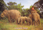 THAILAND - AK 107283 Lovely Family - Elefanten