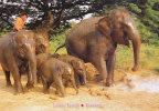 THAILAND - AK 107284 Lovely Family - Elephants