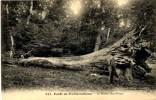 CPA 77 Seine Et Marne Forêt De Fontainebleau Le Briarée - Fontainebleau