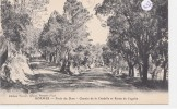 CPA -3637- 83 - Bormes - Chemin Et Route En Forêt Du Dom-Envoi Gratuit - Bormes-les-Mimosas