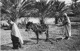 Algérie -Scènes & Types-  Le Labourage - *PRIX FIXE - Scènes & Types
