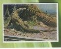 BERLIN - BERLINER AQUARIUM - Riesen-Waran  Insel Komodo Gröbte Noch Lebende Eidechse Wird über 3 M Lang - Varan   (2313) - Animales