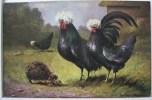 Litho CHROMO Illustrateur MÜLLER Mueller PALETTE Superbe Couple Coq Poule Noir A Crete Blanche Et Herisson - Mueller, August - Munich
