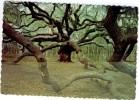 Etats Unis South Carolina The Angel Oak John´s Island  Nature´most Magnificent Living Spectacle BE - Etats-Unis