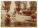 77 ( Seine Et Marne) Photo Originale CHAUMES En BRIE  Ferme D´ ARCY  Charette Entrée 1899 ( 2) - Anciennes (Av. 1900)