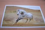 CP  CPM   CARTE POSTALE NEUVE   CHEVAUX   HORSE   PFERD - Cavalli
