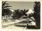 Tunisie - Photographie, Palmier, Hôtel - Lieux