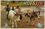QSL Card -Senegal 2001 - Radio Amateur