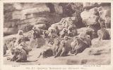 ZOO CARD- SACRED BABOONS ON MONKEY HILL - Monkeys