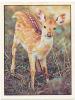 Adhesif N° 15 Bébés Animaux Chocolat Menier / Faon D'axis D' Asie / Animal Animaux  /  IM 51/4 - Stickers