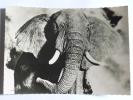 ELEPHANT D'AFRIQUE - Éléphants