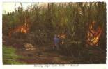 Hawai Burning Sugar Field... XF040 - Etats-Unis