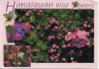 NEPAL - HIMALAYAN WILD FLOWERS - Nepal