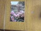 GIVERNY - MUSEE CLAUDE MONET - Le Jardin D'eau - Non Classés