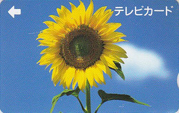 Carte Prépayée Japon - Fleur TOURNESOL - SUNFLOWER Japan Television Card - Blume Prepaid  TV Karte - 1533 - Blumen