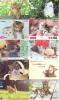 LOT 50 Telecartes + Prepayees Differentes Japon * CHATS * CATS  * KATZE * KATTEN (LOT 234) Prepaid Cards Japan - Collezioni