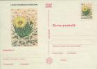 Romania 6 Postal Stationery Postal Cards - Cactusses