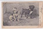 CARD CANI BULL-DOG  FIRMATA STANLEY BERKELEY  -FP-V- 2- -  0882-13726 - Chiens