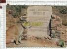 L166 -  TUCSON -  George Mountain Lion  - Monument  -  Lionne - Tucson