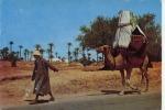 Ile De Djerba La Johfa - Tunisie