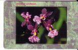 ORCHID ( Czech Republic ) Orchidée Orchidee Orquídea Orchidea Orchids Flowers Fleurs Flower Fleur Fiore Fiori Blumen - Tschechische Rep.