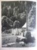 La Route Napoléon , Alpes , Dans La Forét De Chartreuse , Promenade Des Péres , Héliogravure 1955 - Documents Historiques