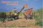 Raisin  Cane Louisiana Sugar Cane - Etats-Unis