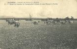 PORTUGAL - ALPIARÇA - TRABALHOS DE LAVOURA NA ALAMEDA - 1910 PC - Santarem